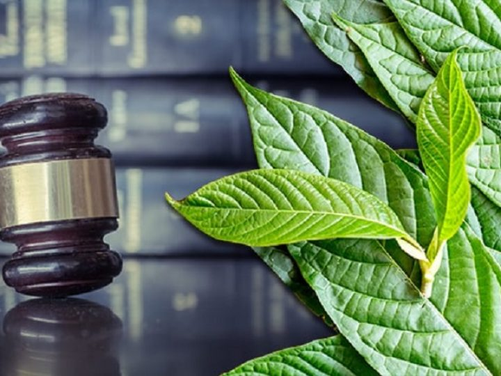 Plans to Ban the Kratom Plant in 2020